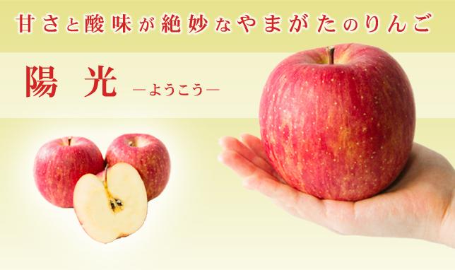 やまがたのりんご「陽光」